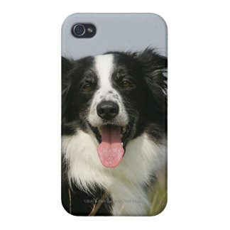 Border Collie Panting Headshot 1 iPhone 4 Cover