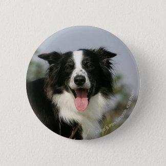 Border Collie Panting Headshot 1 Pinback Button
