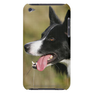 Border Collie Panting Headshot 2 Case-Mate iPod Touch Case
