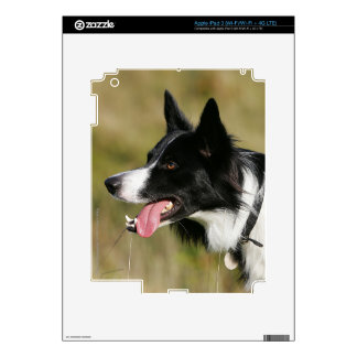 Border Collie Panting Headshot 2 Skin For iPad 3