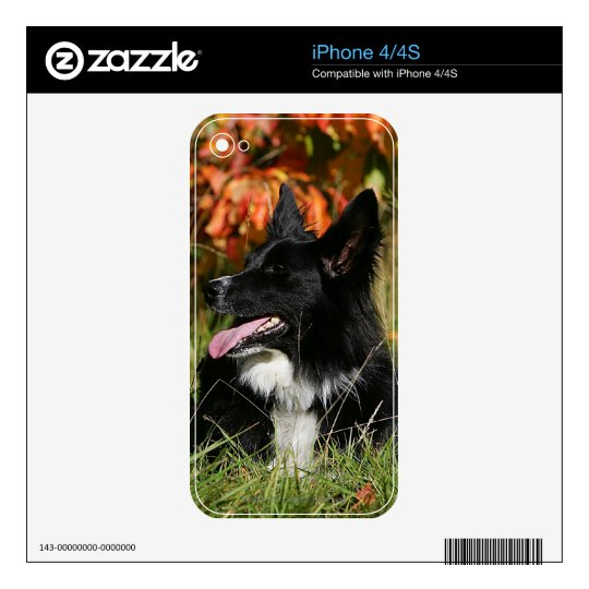 Border Collie Panting Laying Down Decals For iPhone 4