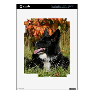 Border Collie Panting Laying Down iPad 3 Decal
