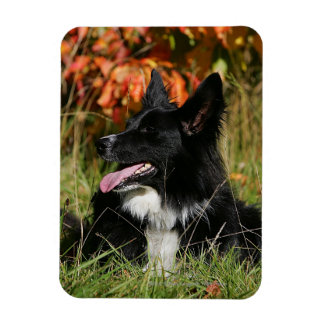 Border Collie Panting Laying Down Magnet