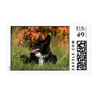 Border Collie Panting Laying Down Postage