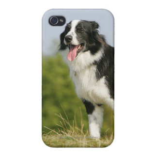 Border Collie Panting Standing Case For iPhone 4