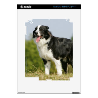 Border Collie Panting Standing iPad 3 Decals