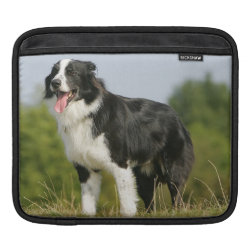 iPad Sleeve with Collie Phone Cases design