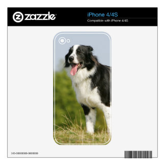 Border Collie Panting Standing Skin For The iPhone 4S