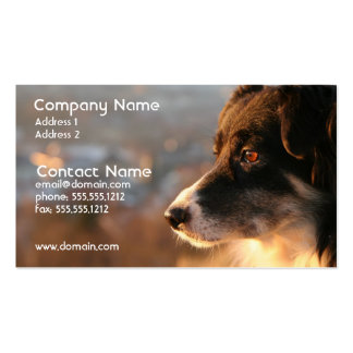 Border Collie Photo Business Card