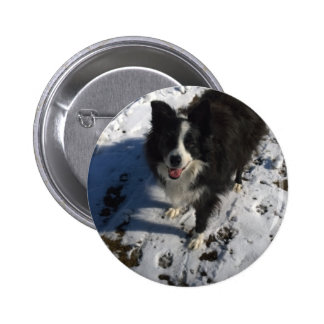 Border Collie photo on products Button