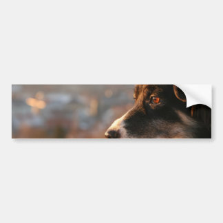 Border Collie Photos Bumper Stickers