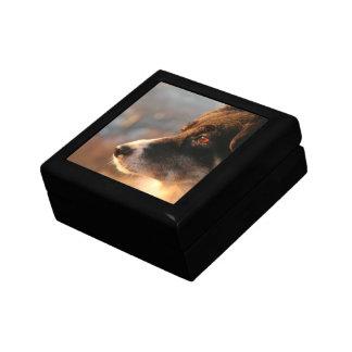 Border Collie Photos Gift Box