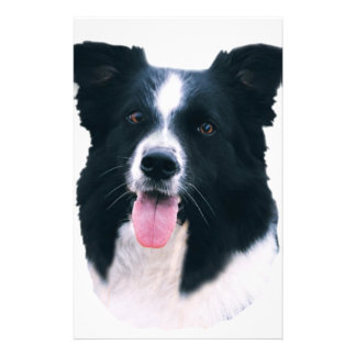 Border Collie Portrait Personalized Stationery