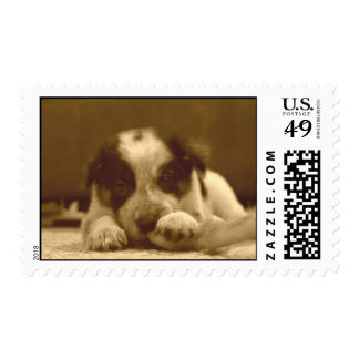 Border Collie Postage~Ava Postage Stamps