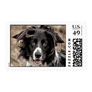 Border Collie Postage Stamp