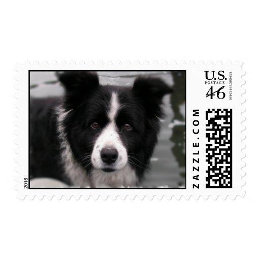 Border Collie Postage Stamp