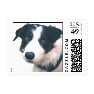 Border Collie Postage Stamps