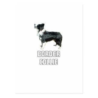Border Collie Post Card