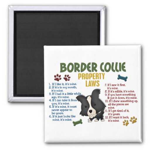Border Collie Property Laws 4 2 Inch Square Magnet