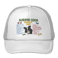 Border Collie Property Laws 4 Hats