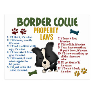Border Collie Property Laws 4 Postcard
