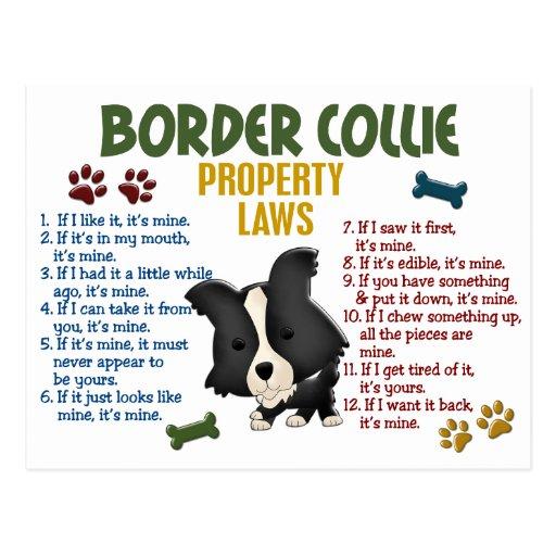 Border Collie Property Laws 4 Postcard