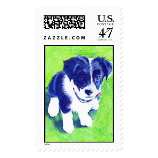Border Collie Pup in coloured Pencil Postage