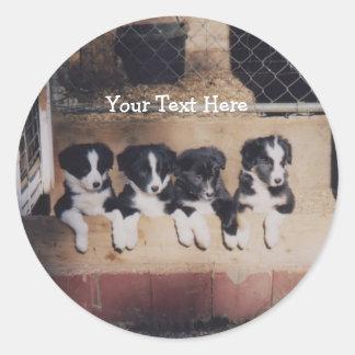 Border Collie Puppies Dog Sticker