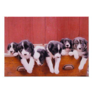 Border Collie Puppies In Drawer Painting Print