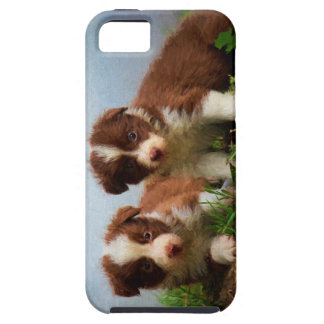Border Collie Puppies iPhone SE/5/5s Case