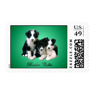Border Collie Puppies Postage Stamp