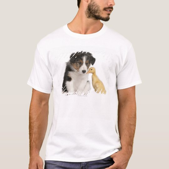Border collie puppy (6 weeks old) playing with T-Shirt