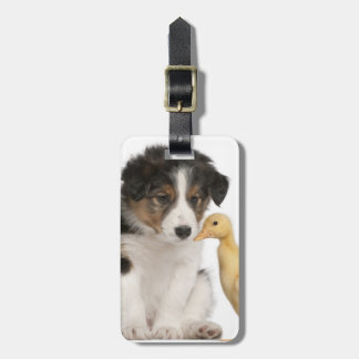 Border collie puppy (6 weeks old) with duckling bag tag