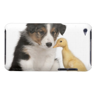 Border collie puppy (6 weeks old) with duckling iPod touch case
