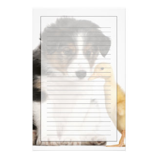 Border collie puppy (6 weeks old) with duckling stationery