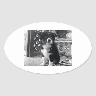 border collie puppy b w png oval stickers