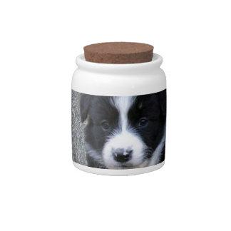 Border_Collie_Puppy,_ Candy Jar