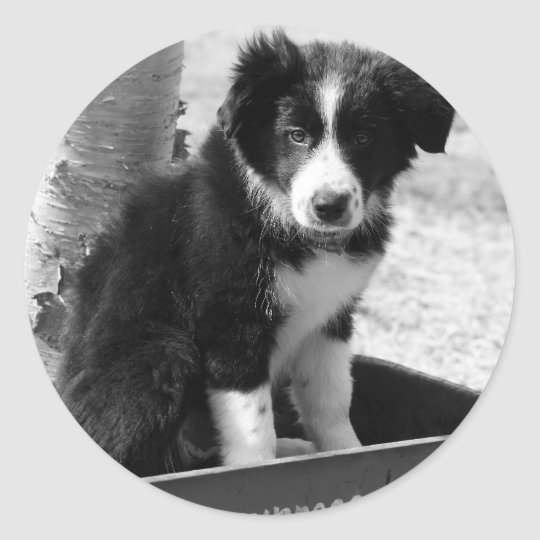Border Collie Puppy Classic Round Sticker