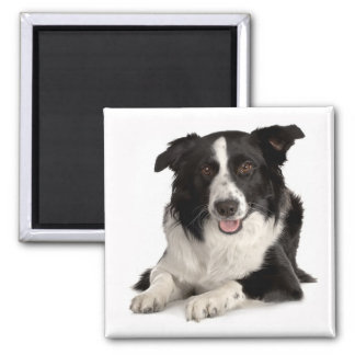 Border Collie Puppy Dog Black And White Magnet