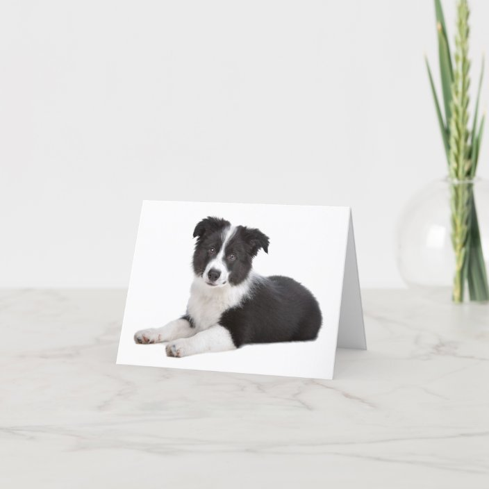Border Collie Blank Note Card