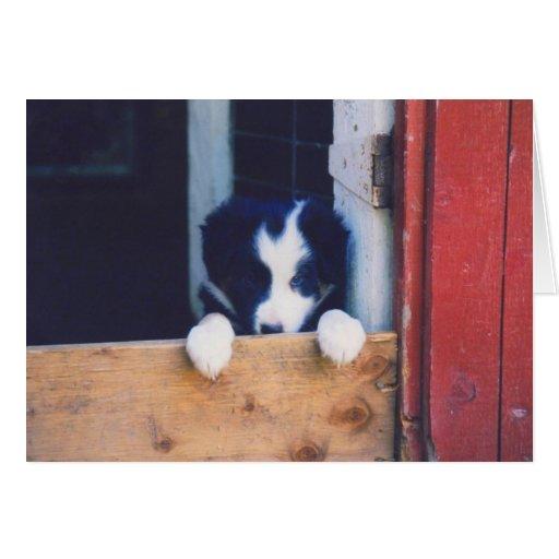 Border Collie Puppy Dog Card
