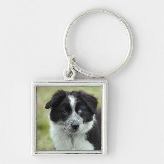 Border Collie puppy dog keychain, gift idea Keychain