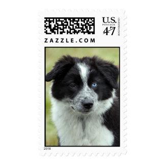 Border Collie puppy dog postage stamp