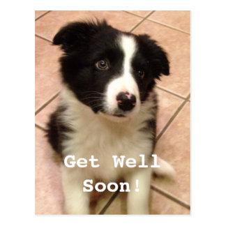 Border Collie Puppy Get Well Postcard