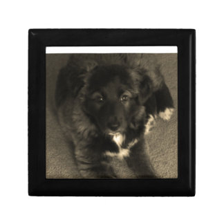 Border Collie Puppy Jewelry Boxes