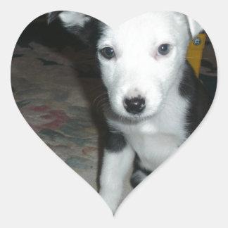 Border Collie Puppy Heart Sticker