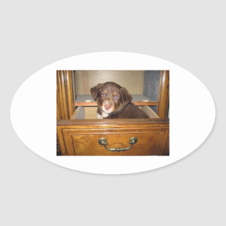 border collie puppy in drawr png oval sticker