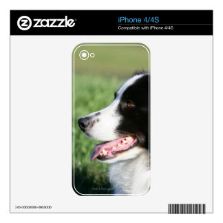 Border Collie Puppy Laying Down Decals For iPhone 4S