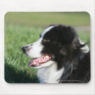 Border Collie Puppy Laying Down Mouse Pad