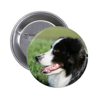 Border Collie Puppy Laying Down Pinback Button